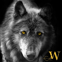 Winterwolf_Logo